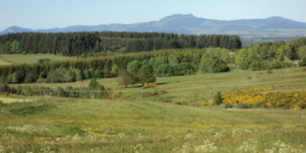 Nature en fond le Mont Mézenc